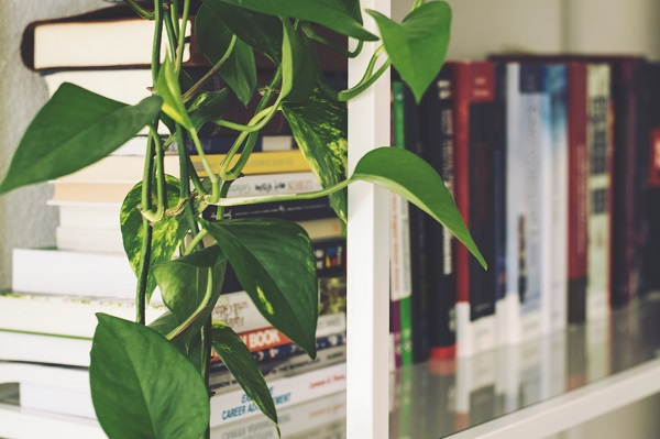 book-shelves-with-plant